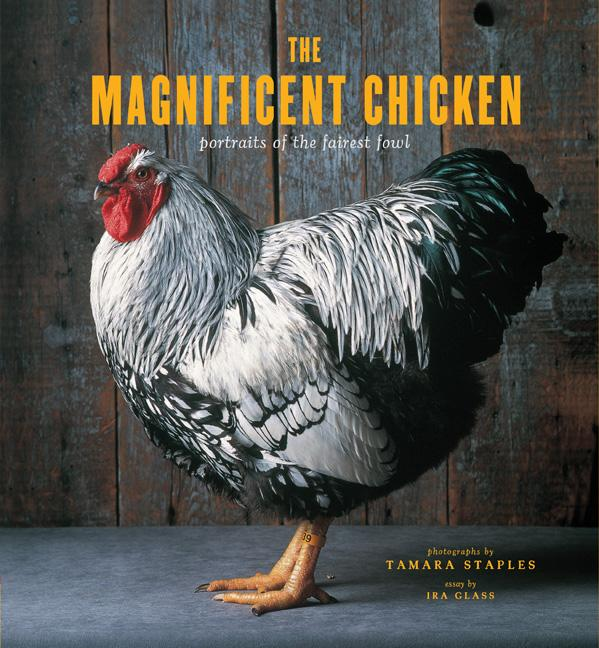 Opening Reception: The Magnificent Chicken by Tamara Staples